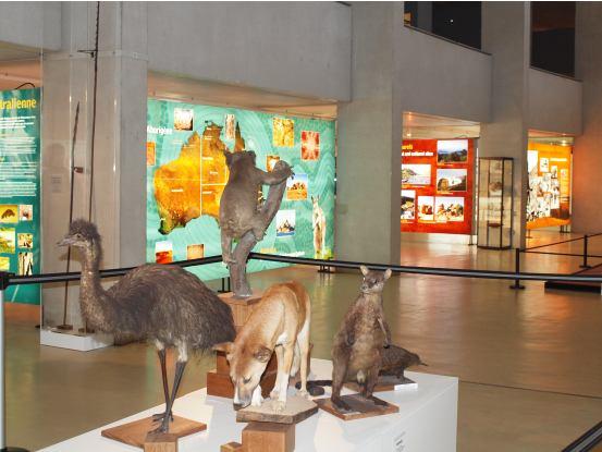 Animaux naturalisés de l'exposition Australie 60 000 ans de culture aborigène
