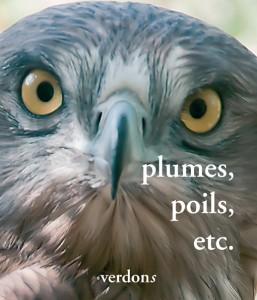 """Revue Verdons n° 41 """"plumes, poils, etc..."""""""